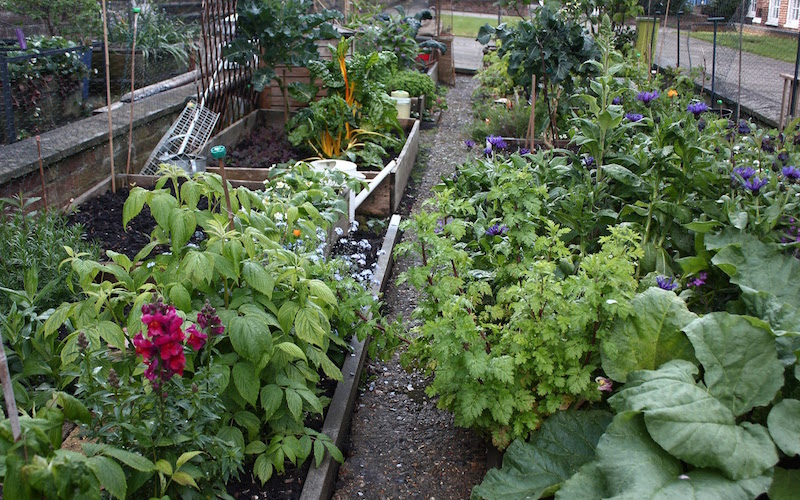 raised urban veg beds