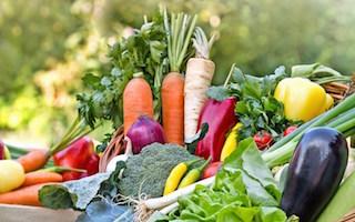 13 vibrant veg growing blogs