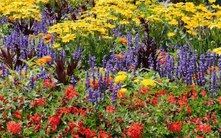9 fantastic flower garden blogs