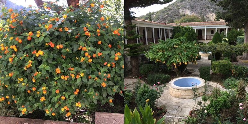 lantana and sunken garden - cyprus 2017