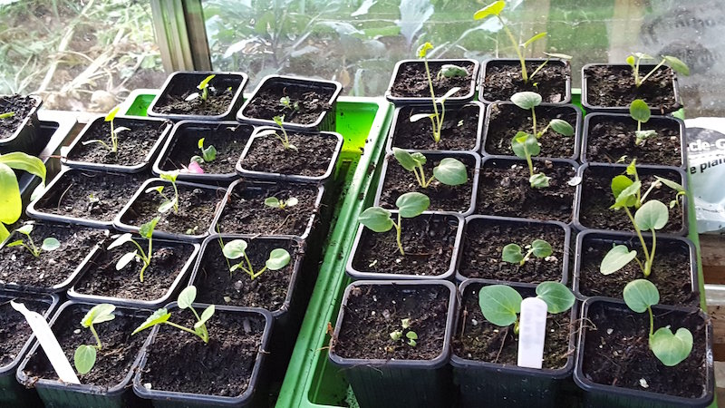 propagator blog seedlings