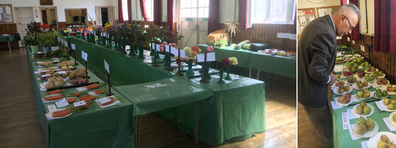 show exhibits and judging