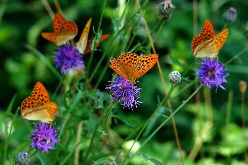 diy garden butterflies