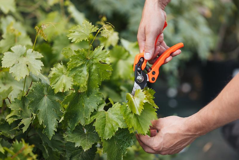 pro gardener pruning