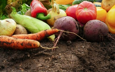 Top soil care tips from the experts