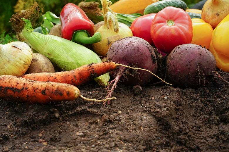 Top soil care tips
