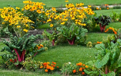 3 simple ways to combine ornamental and edible planting