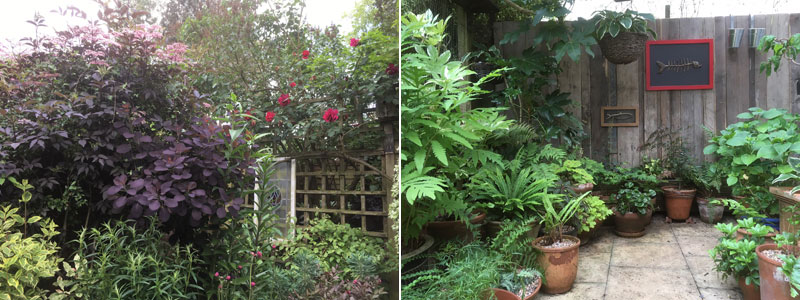 Caroline#s garden June 2018