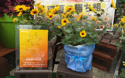 Another International Award for T&M's SunBelievable™