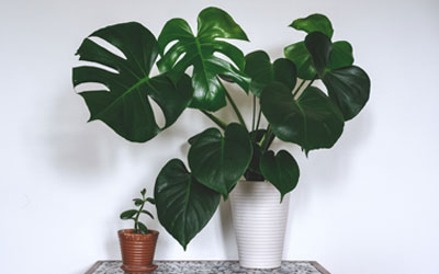 Ellen Mary's Top 5 Houseplants