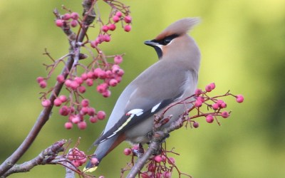 How to attract birds to your garden all year round