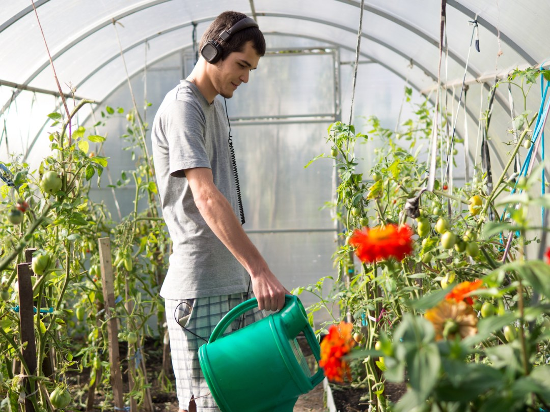 Man watering plants in a greenhouse listening to podcasts/music on his headphones