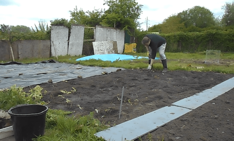 Man standing over freshly dug earth on an allotment