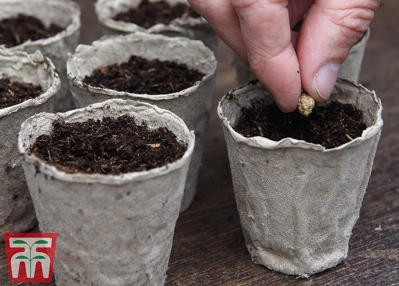 48-pack biodegradable fibre grow pots from Thompson & Morgan