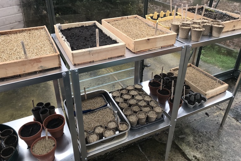 Wooden trays with sown seeds