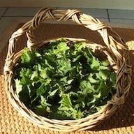 Basket of nettles for nettle soup