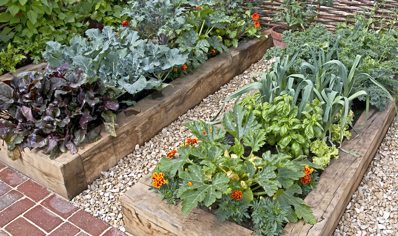 raised-veg-beds-veg-tips-article