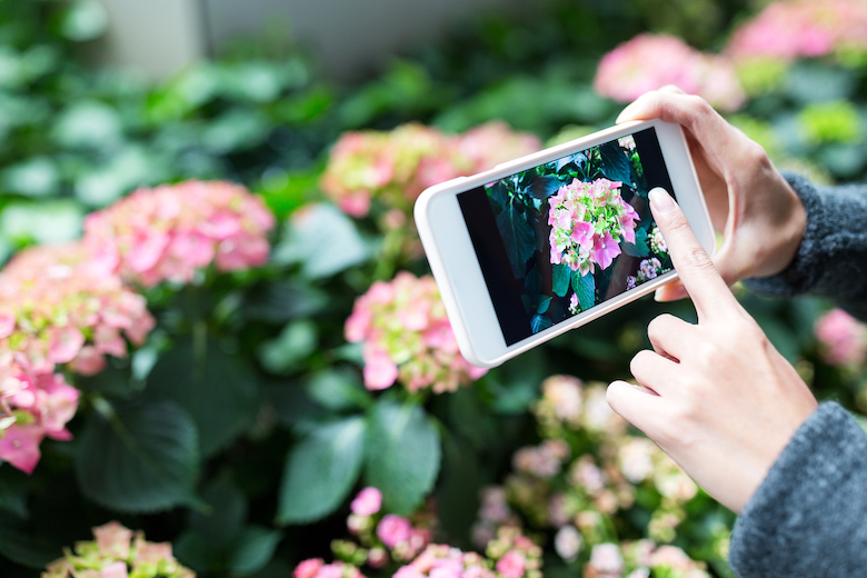 Person taking photo of garden with smartphone