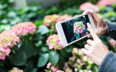 Top tips for Instagram-ready gardens