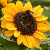 Mandy Bradshaw, chatty gardener, gardening expert