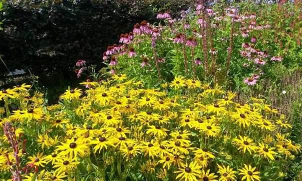 Late-flowering perennials like Rudbeckia and Echinacea