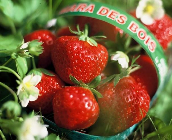 Strawberry 'Mara de Bois'