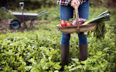 Why is Sustainable Gardening so Important These Days?