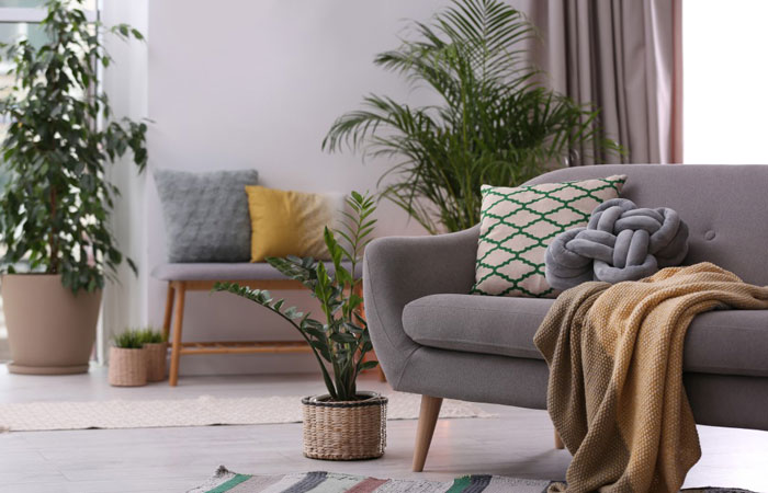 Moving house plants to your new home