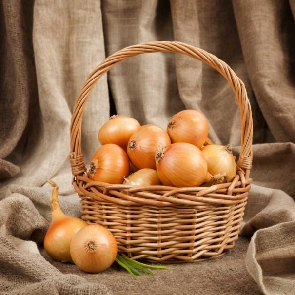 Onion (Autumn Planting) 'Centurion' from T&M