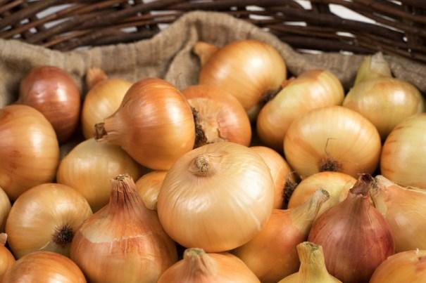 Onion (Autumn) 'Troy' from Thompson & Morgan