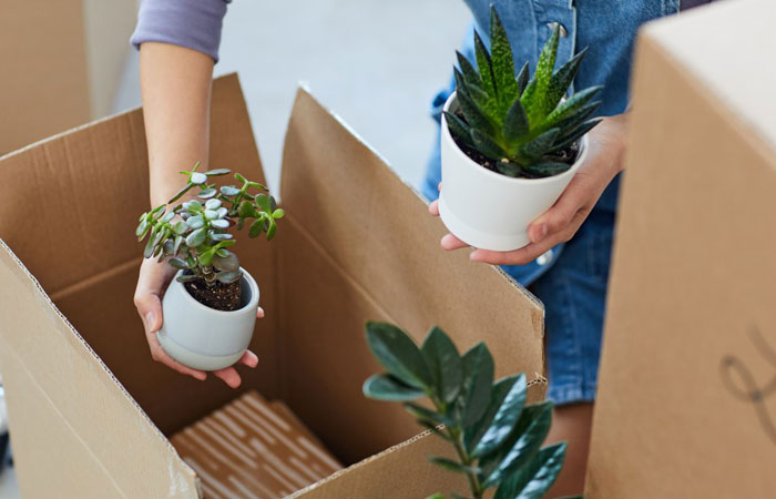packing plants into boxes
