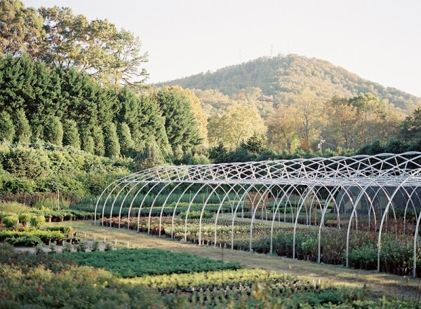 Greenhouse frame in the mountains, greenhouse plants