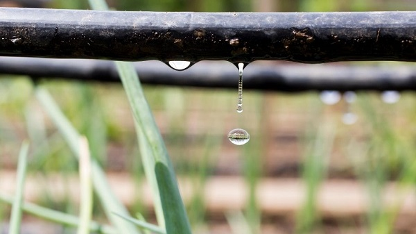 Water your plants the right way; plant with water droplets hanging on, grass in the background