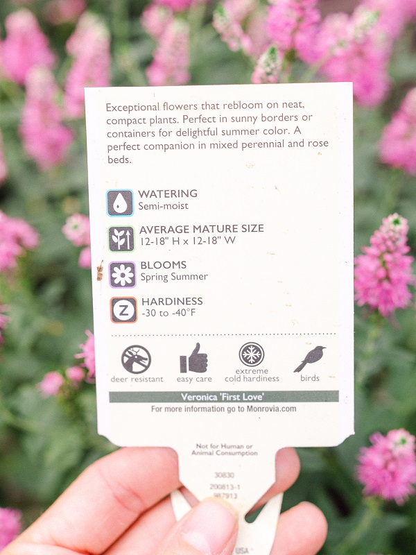 Plant label in front of pink flowers. Label shows water, mature size, blooms, and hardiness and more.