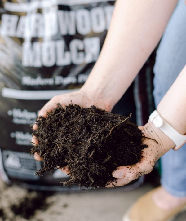 Holding a handful of mulch for display