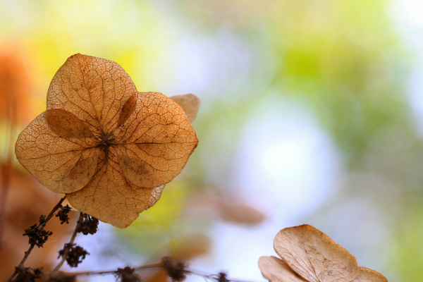 A flower as it prepares to for the winter.