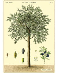Olive tree wrap poster from Those Plant Ladies. Neutral background with green and brown olive tree.
