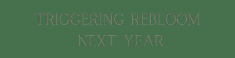 """Triggering rebloom next year"" text."