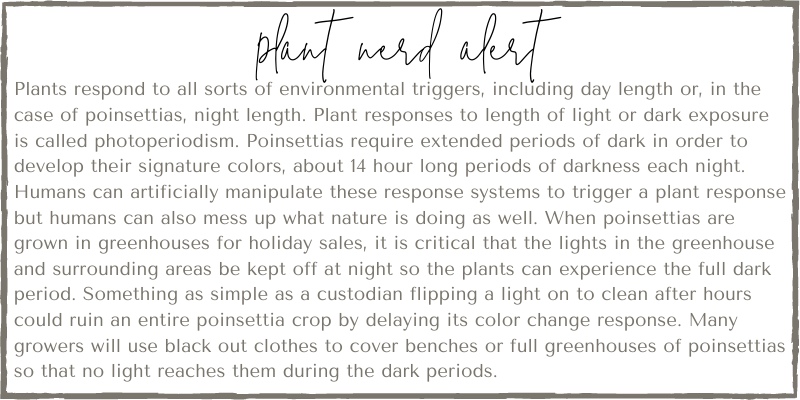 Plant nerd alert from Those Plant Ladies. A detailed explanation of poinsettias and how they require extended dark periods in order to develop their color.