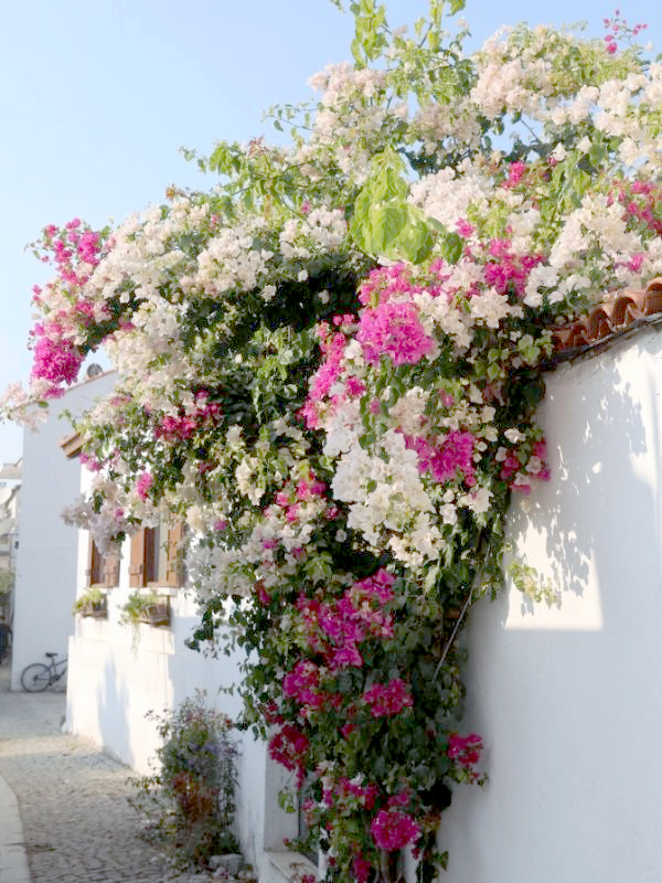 Large, colorful flowers growing over the side of a roof and wall.