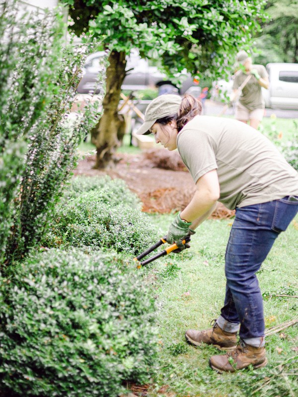 Member of Those Plant Ladies landscape installation crew pruning shrubs.