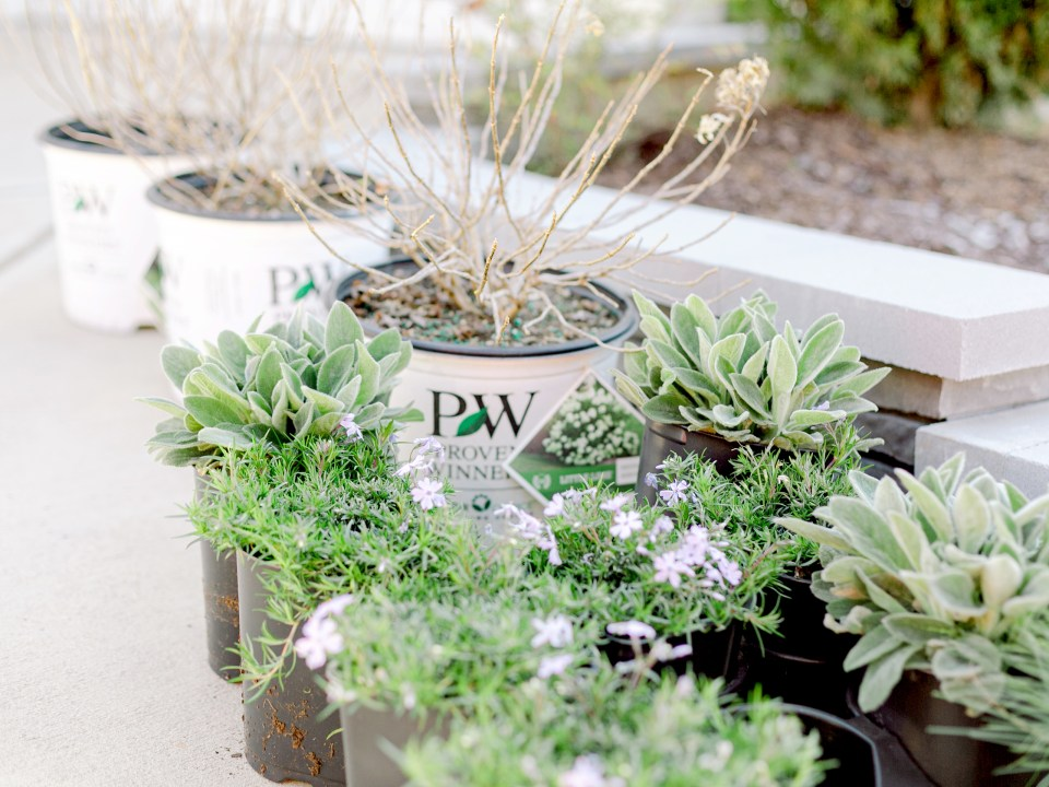 The plants from Proven Winners for the installation in Charlotte, NC.