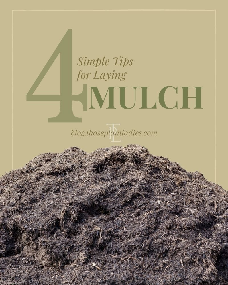 Infographic with 4 Simple Tips for Laying Mulch by Those Plant Ladies.