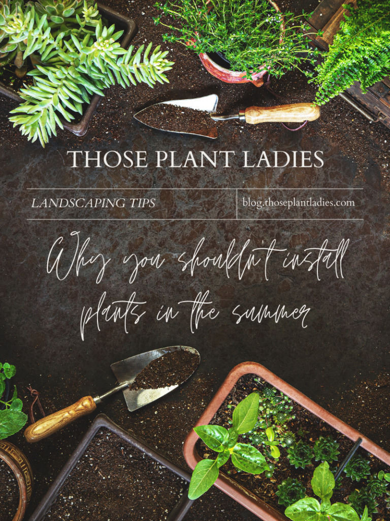 """""""Why you shouldn't install plants in the summer"""" on the those plant ladies blog."""