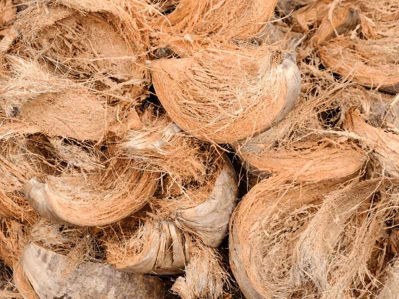 How to pick the right soil for your project by Those Plant Ladies; shown here: coconut coir.