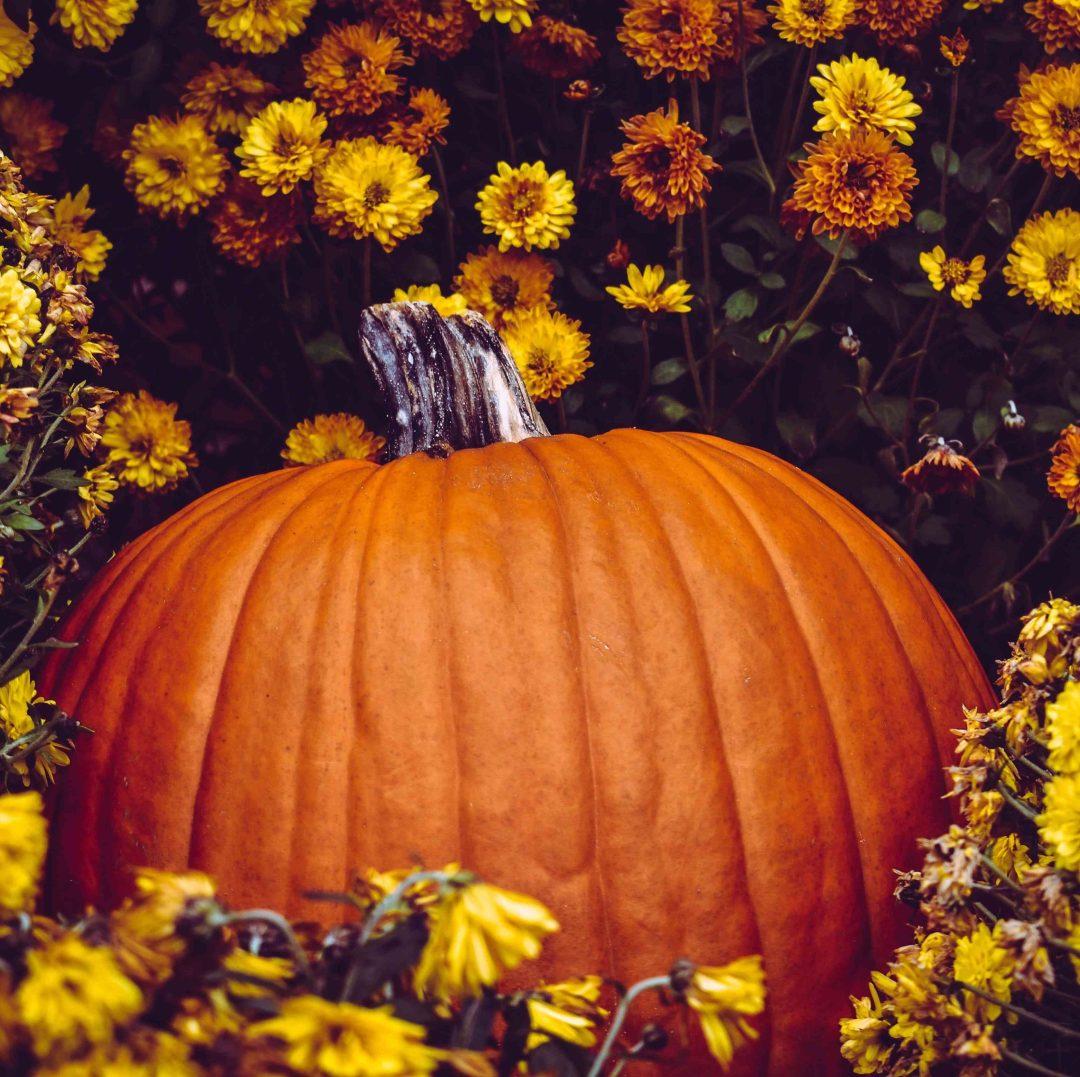Pumpkin in orange flowers