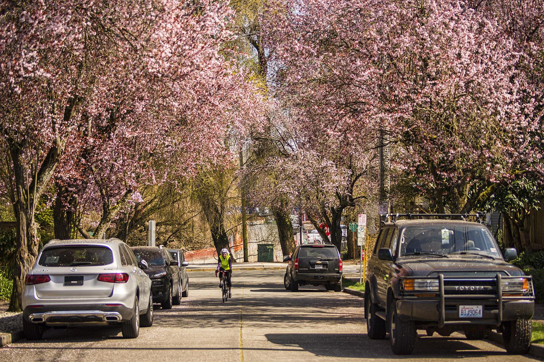 Montlake neighborhood of Seattle. (March 2020)