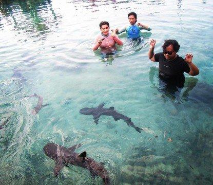 Kolam hiu