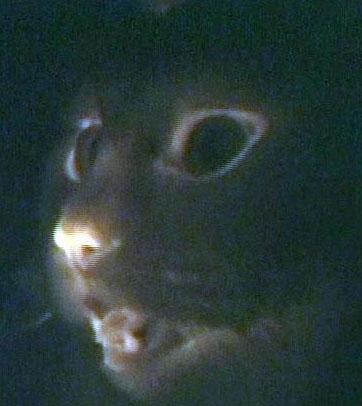 https://i1.wp.com/blog.tmcnet.com/blog/tom-keating/images/glow-in-dark-cats.jpg