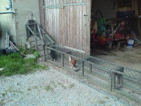 Weg in den Hühnerstall